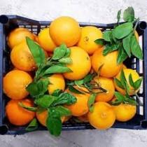 BAGNOLI  VOGLIA DI FRAGOLA KG 1.3